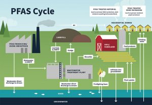PFAS cycle showing the many different methods PFAS can enter a household through consumer products, food, and drinking water.