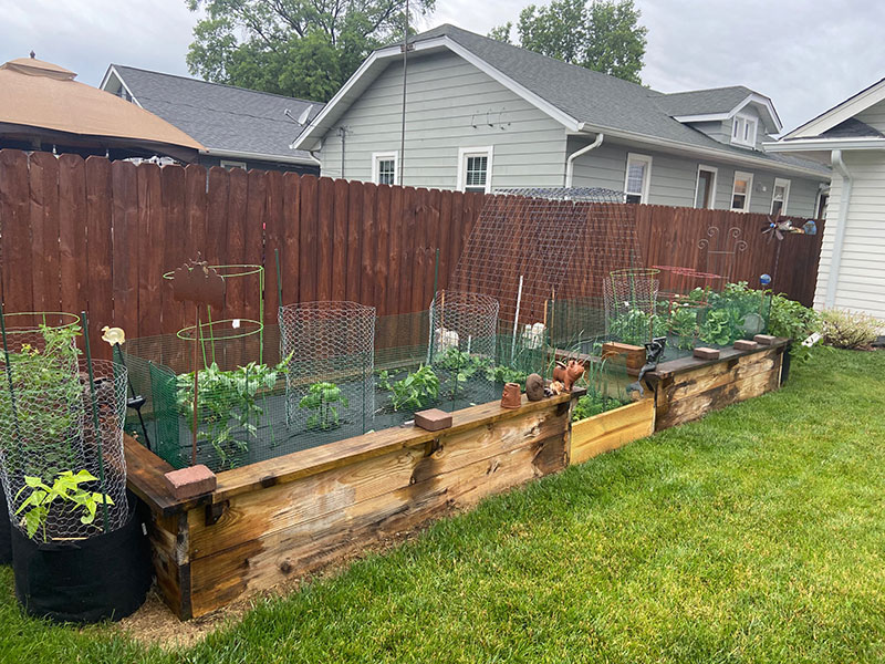 Garden in a wooden raised plant bed in a backyard