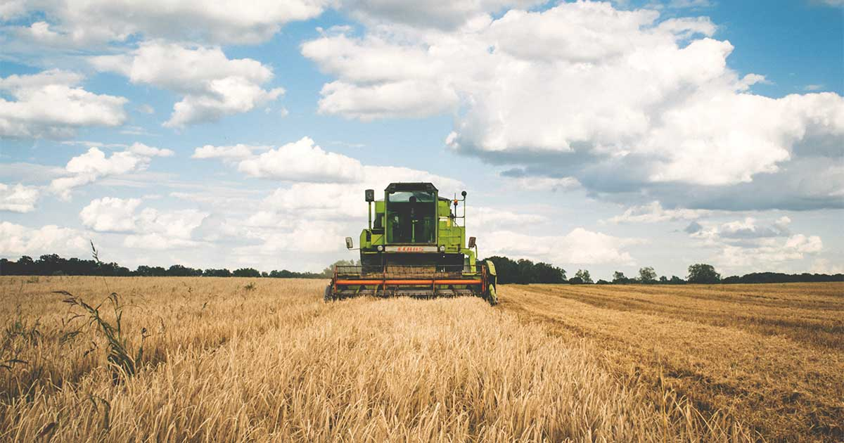Tractor harvesting grains in field participating in agribusiness